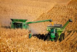 harvesting 10-2015