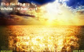 harvesting God's Word 10-2015